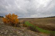 Steppe_042